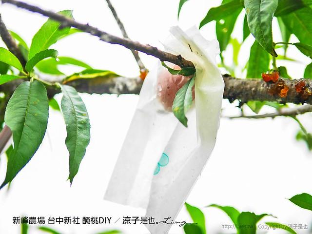 新峰農場 台中新社 醃桃DIY 1