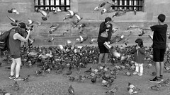 Street Scene with Crazy Birds