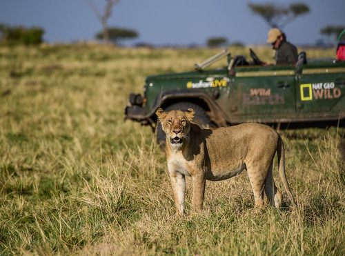 NATIONAL GEOGRAPHIC FILMS MAASAI MARA