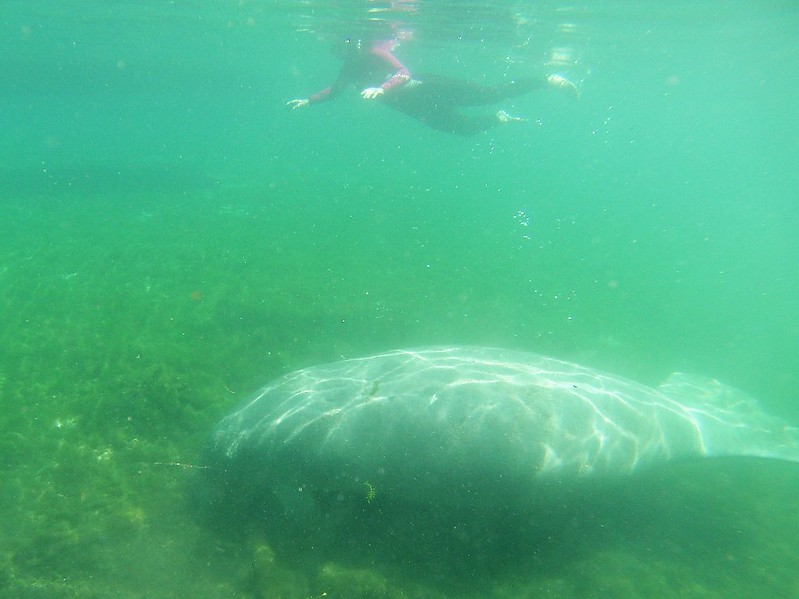 Snorkeling in the Manatee Capital of the World, Crystal River, Fla., April 27, 2019