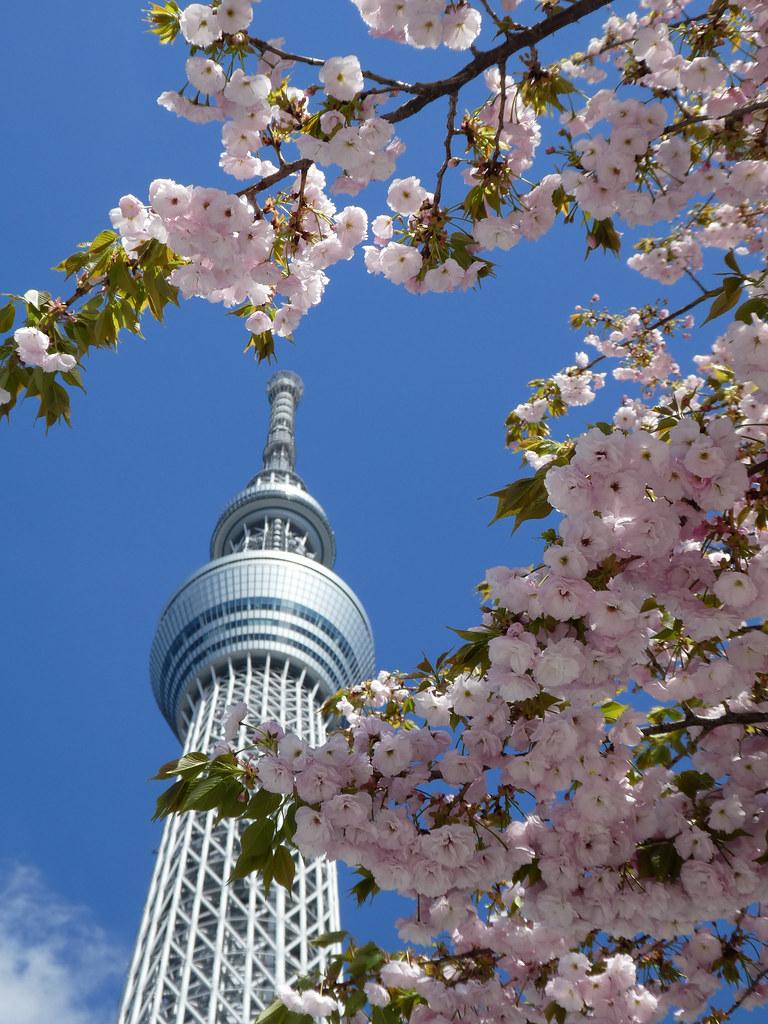 Башня и сакура