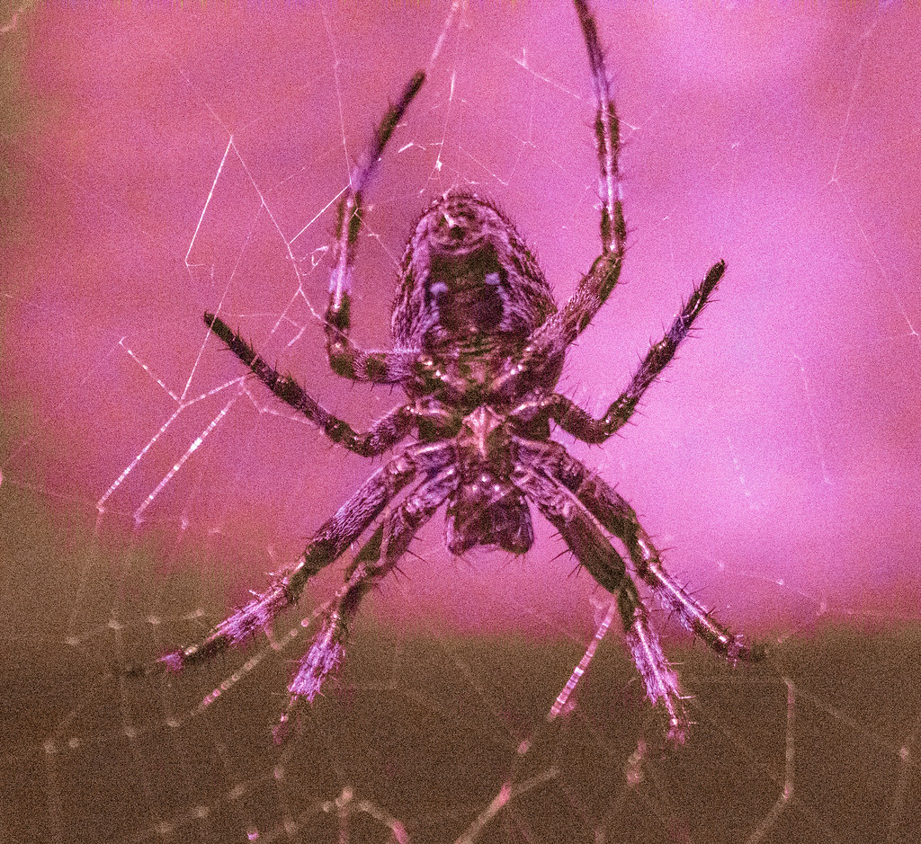 Spider UV_2