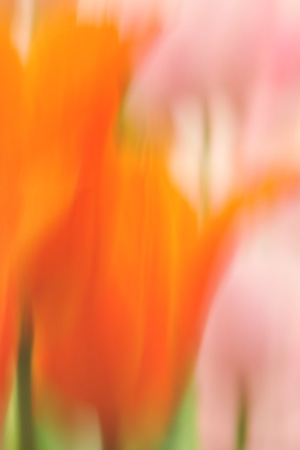 ICM abstract: flower power - #5