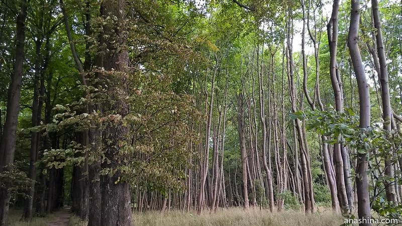 Парк имени Беккера, Янтарный, Калининградская область