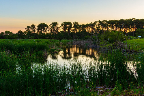 hiltonhead pickneyisland southcarolina grass green landscape morning pond sunrise trees water