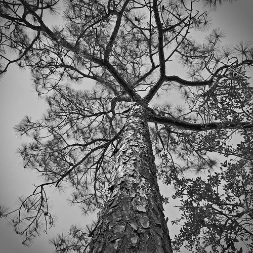 florida unitedstates portrichey statepark nature naturereserve park tree bw blackandwhite