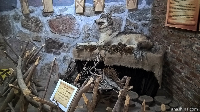 Янтарный замок, Янтарный, Калининградская область, Прусская волчица Герра