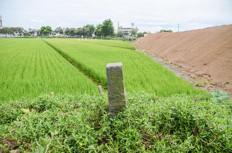 小茄苳冠字補陳(01)台灣省政府圖根補點(Elev. 31 m) 1