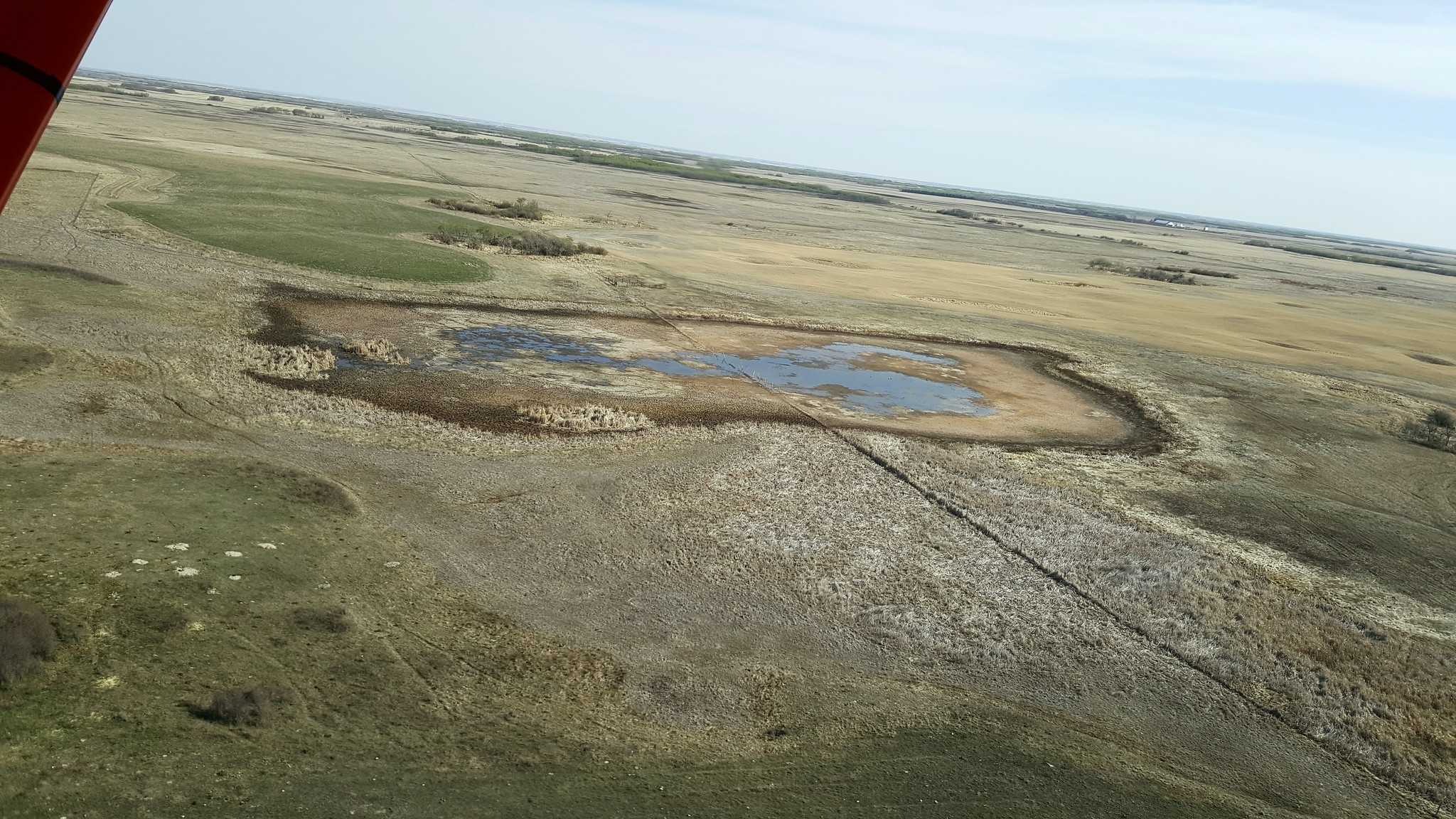This semi-permanent to the west of Moose Mountain will be dry in a few weeks without some substantial rain events. Photo Credit: Jeff Drahota, USFWS