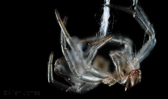 Empty Spider exoskeleton
