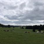 2019-05-15 Etang de la Gruère_Fred (41)