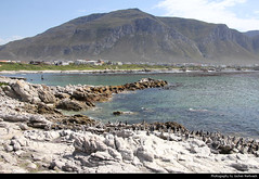 View across Betty's Bay with penguins on the shore, Betty's Bay, South Africa
