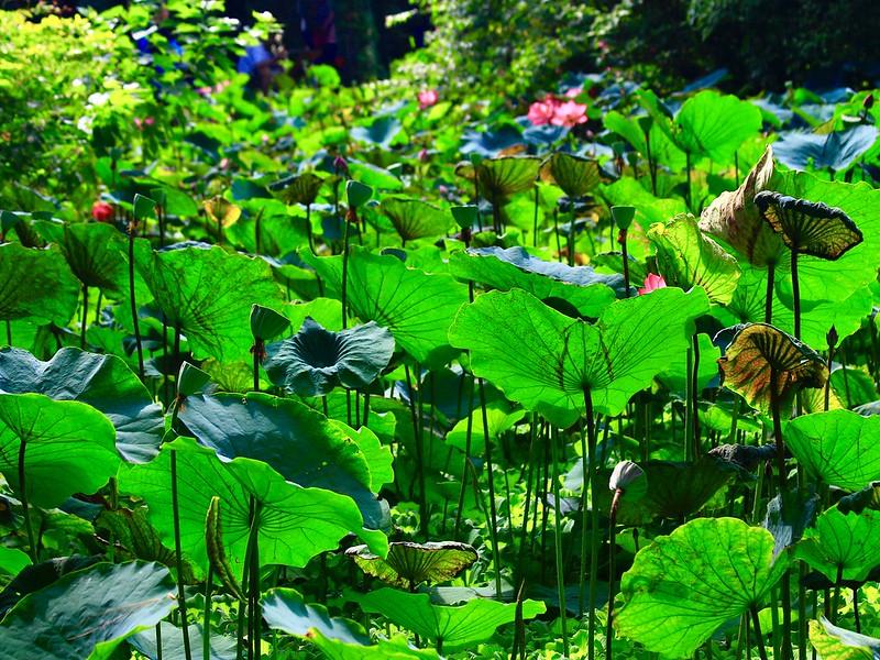 台北植物園2019