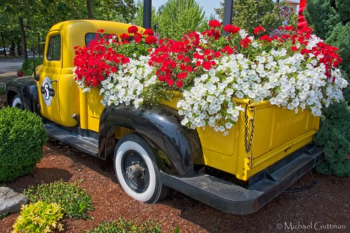 flowers petunias pickuptruck garden red white yellowpickuptruck international eugene oregon spring summer colorful