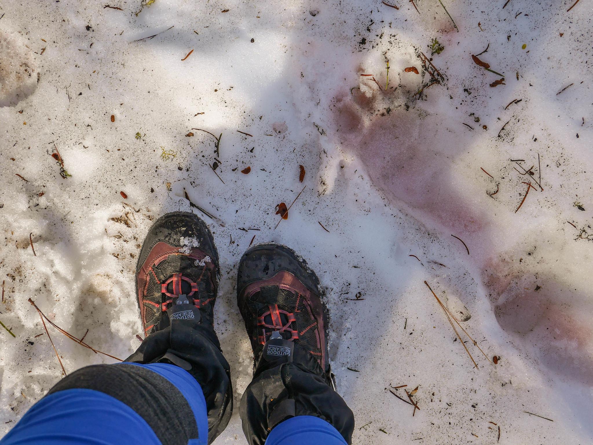 Bear tracks!