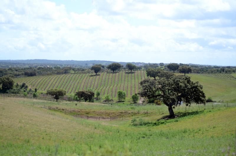 Casa Relvas: vinhos na adega e o almoço na Herdade de São Miguel