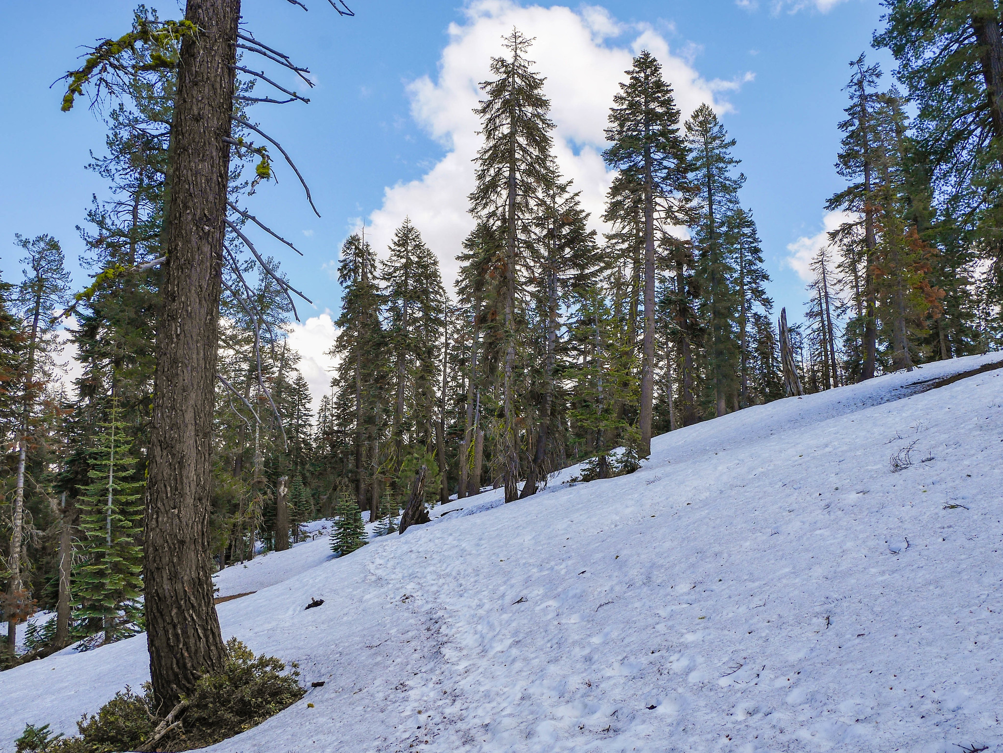 Taft Point trail was 100% snow covered