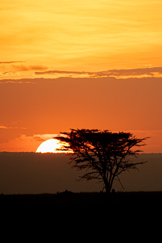 africa serian maranorth kenya masaimara narok riftvalleyprovince