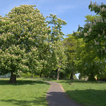 Spring at Ashton Park, Preston