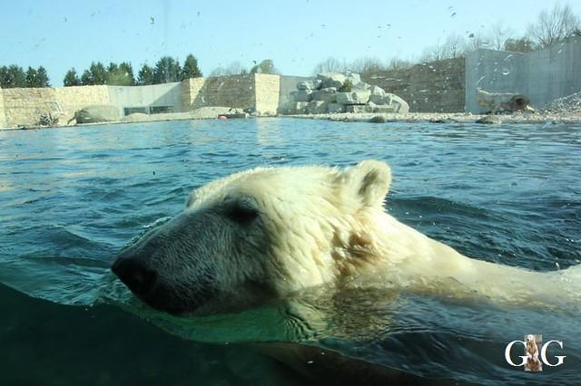 Besuch Zoo Tallin 27.04.201926