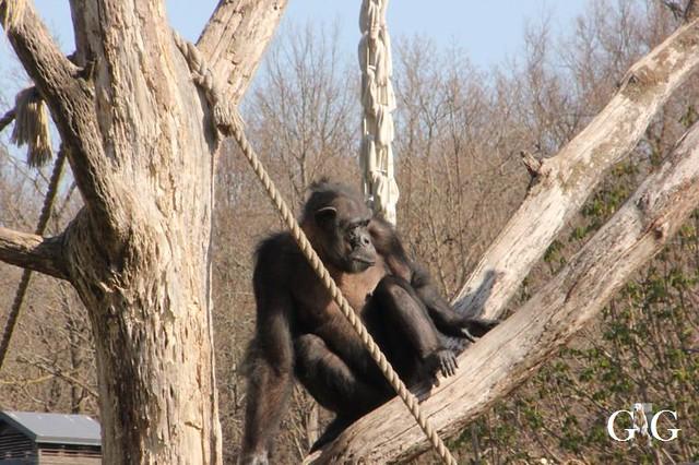 Besuch Zoo Tallin 27.04.201950