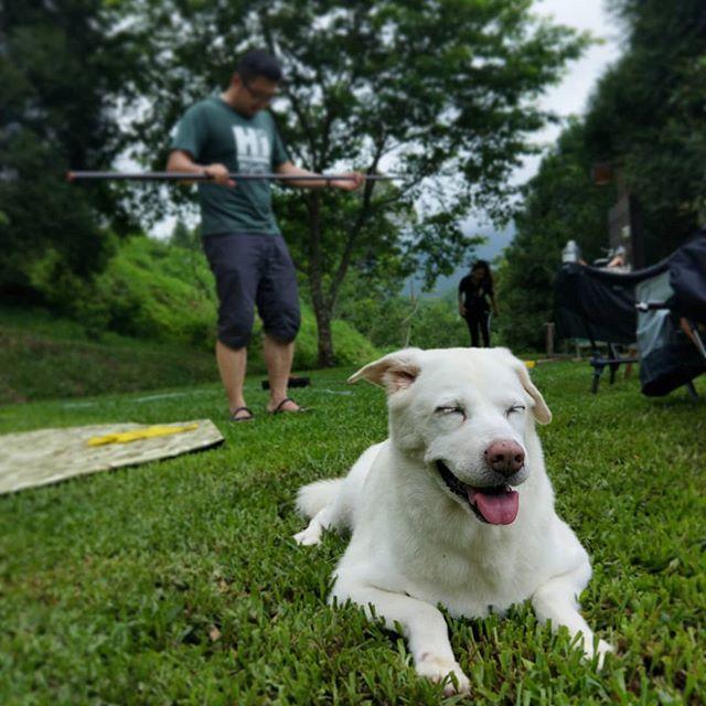 20190519 球兒超開心 #歐北露 #ilovecamping #ilovedogs #campingwithdogs #林球子