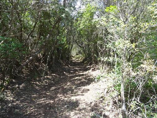 La suite du chemin de Luviu après le 2ème plateau herbeux