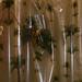 <p><a href=&quot;https://www.flickr.com/people/nolehace_photography/&quot;>nolehace</a> posted a photo:</p>&#xA;&#xA;<p><a href=&quot;https://www.flickr.com/photos/nolehace_photography/47092507354/&quot; title=&quot;Epidendrum longipetalum species orchid 5-19&quot;><img src=&quot;https://live.staticflickr.com/65535/47092507354_af646197c3_m.jpg&quot; width=&quot;240&quot; height=&quot;160&quot; alt=&quot;Epidendrum longipetalum species orchid 5-19&quot; /></a></p>&#xA;&#xA;