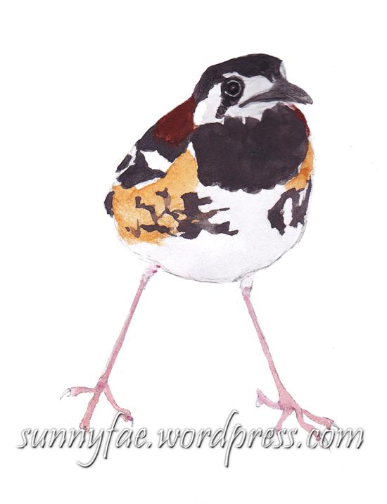 little brown bird in watercolour