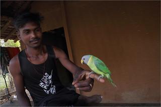 parakeet, chichigaontha