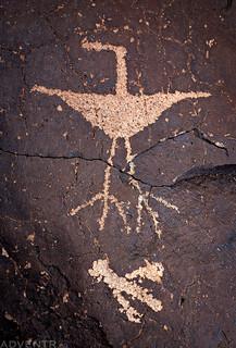 Bird On A Boulder | by IntrepidXJ