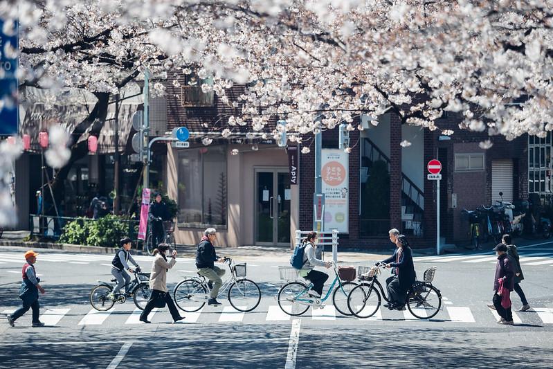 平成最後櫻花季|Tokyo
