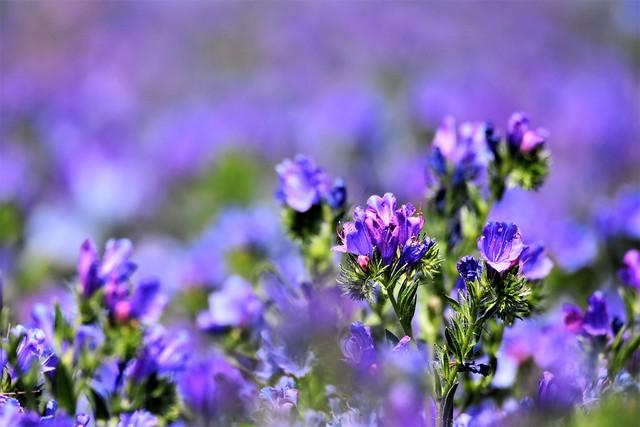 Purple bokeh.