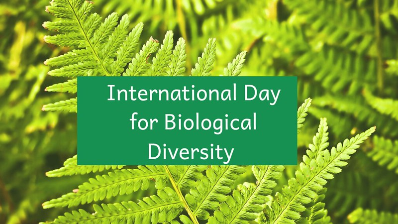 international day for biological diversity how to celebrate