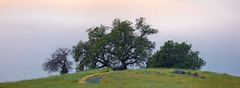 3-Tree-Hill-Pano
