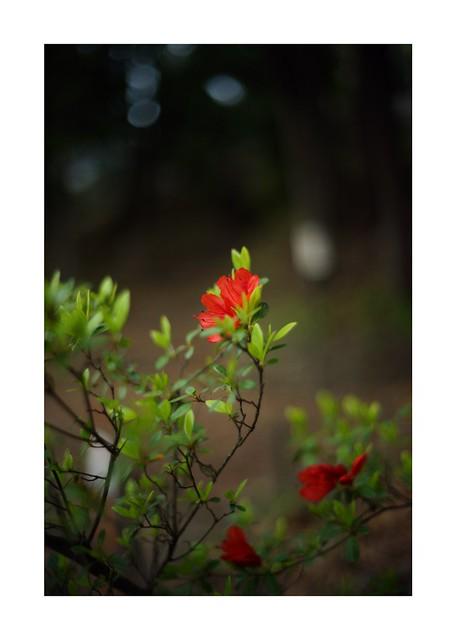 2019/4/12 - 10/15 photo by shin ikegami. - SONY ILCE‑7M2 / Voigtlander NOKTON CLASSIC 40mm f1.4 SC VM