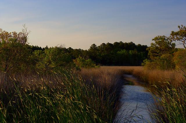 Currituck wetlands