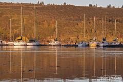 Morning at the Pelican Marina