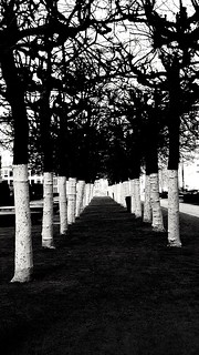 Sombre Monochrome Trees, Brussels | by John of Witney