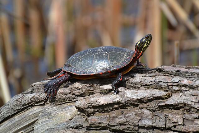 Turtle Stalking