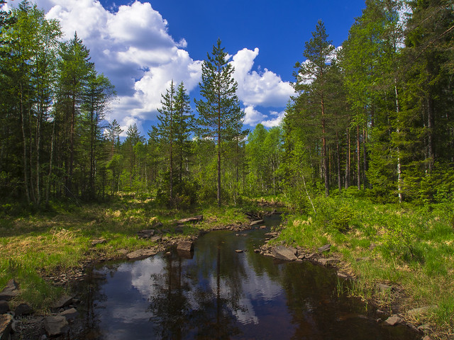 Norwegian Forest Stream Crossing