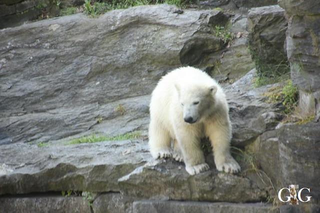Besuch Tierpark Friedrichsfelde 19.05.201930