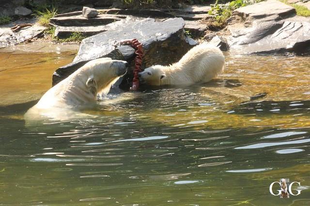 Besuch Tierpark Friedrichsfelde 19.05.201921