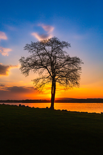 tree sunset river shore contrast sky vertical evening canoneos5dmarkiii canonef1635mmf4lis nature landscape wisconsin