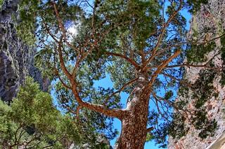 Torrent de Pareis, Sa Calobra, Mallorca