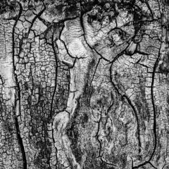 tree surface portrait I