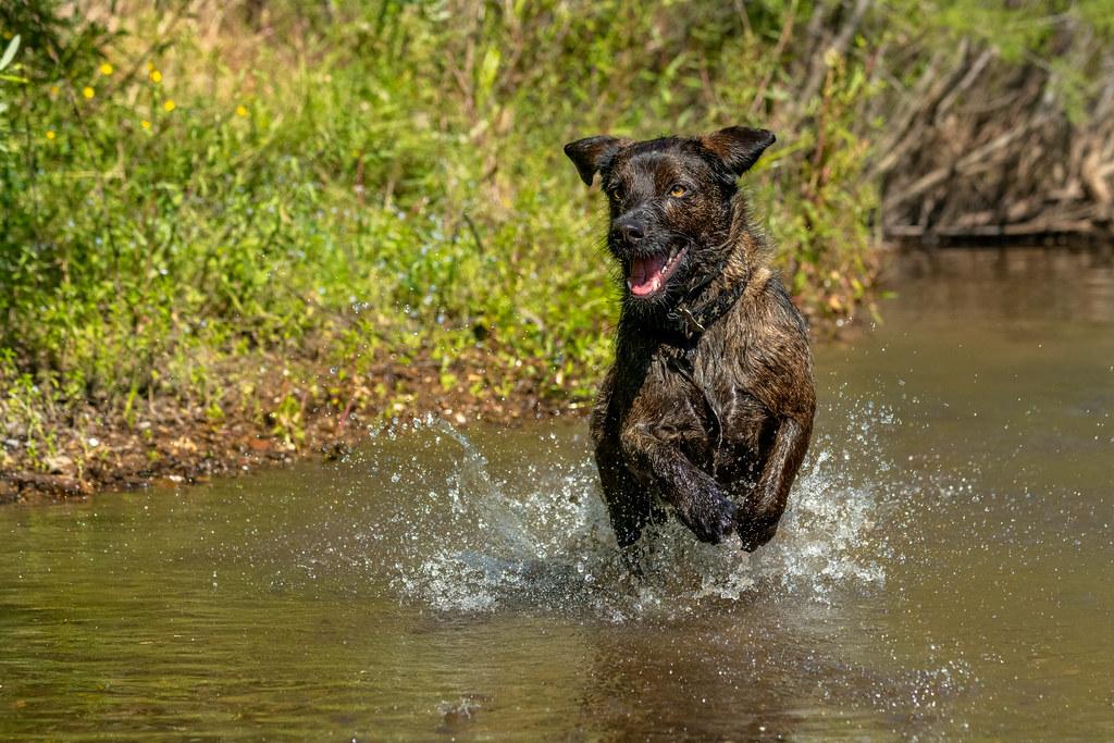 Wally Splashing In The River
