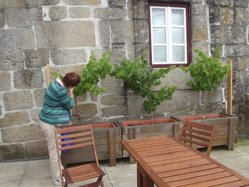 Beth examines some vines