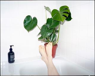 Bathing monstera