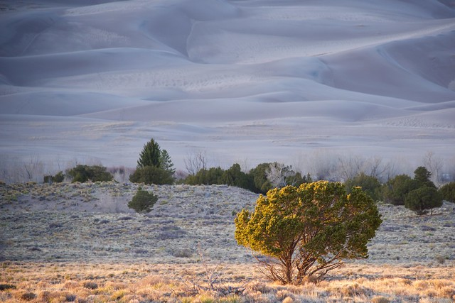 Sunset Tree at Great Sand Dunes